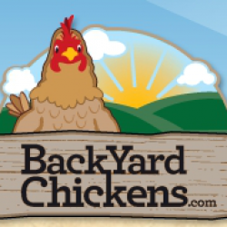BackYard Chickens.com