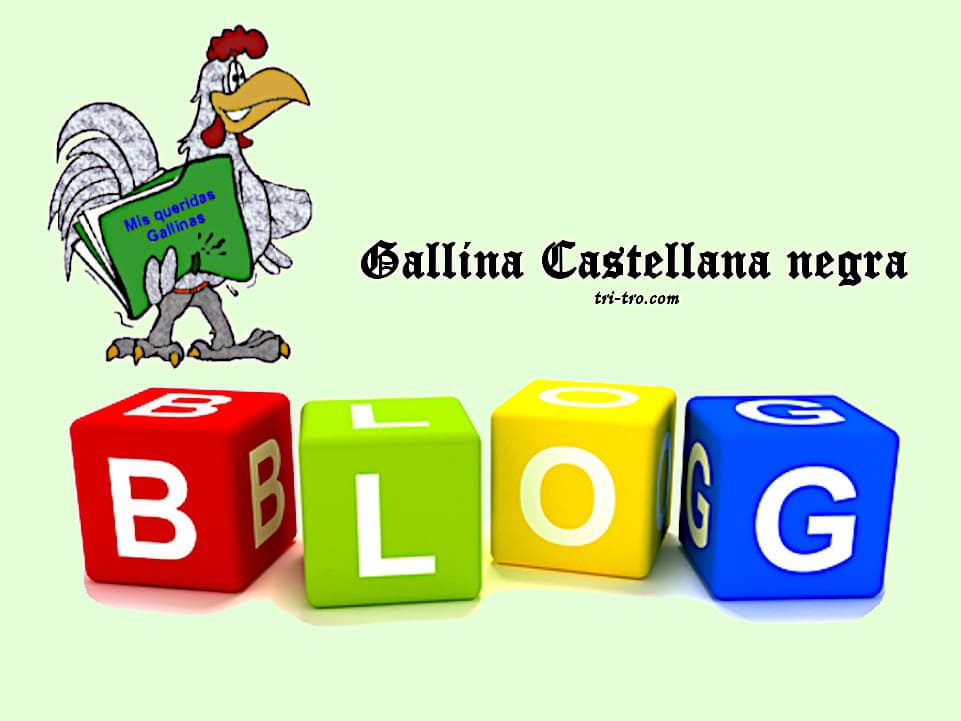 Blog Gallina Castellana negra