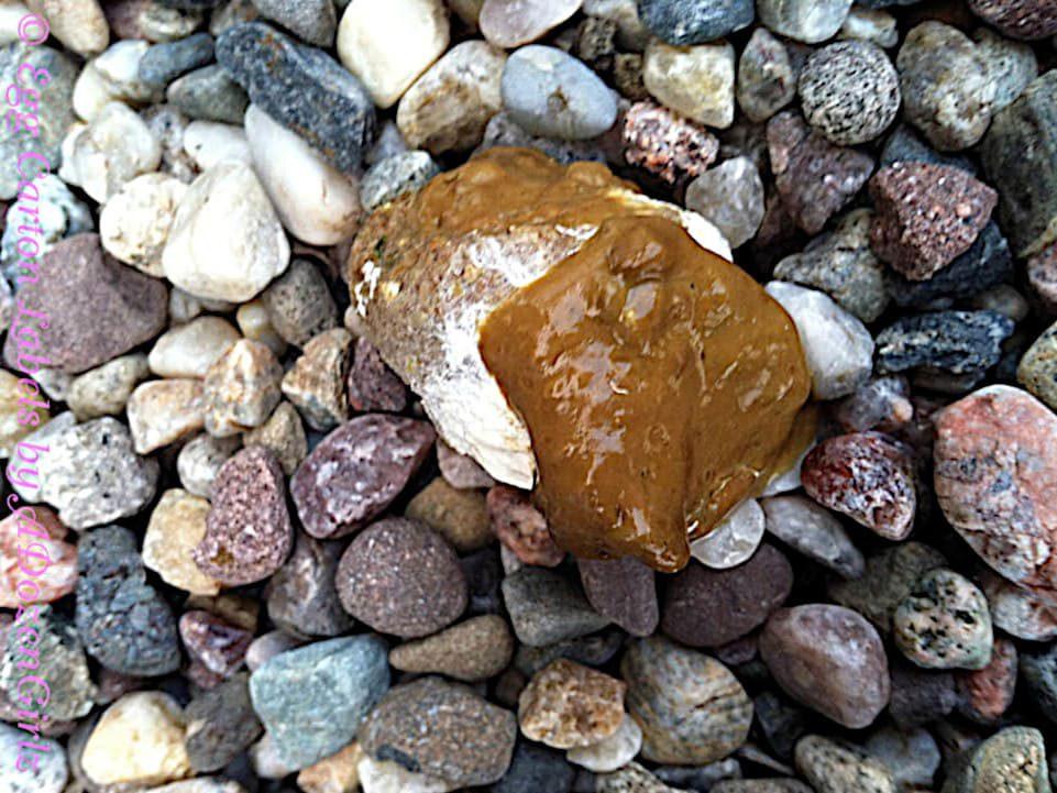 Caca normal marrón